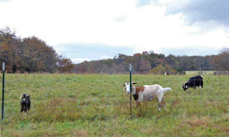 One of the pastures of Trinity Hills Farm, a Catholic Worker ministry established in 2011 by then-Bishop of Springfield-Cape Girardeau James V. Johnston, with Jacob sheep greeting a visitor. (Marty Denzer/Key photo)